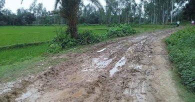 এইটা রাস্তা নাকি চাষ করা জমি - রামনাথপুর - পীরগঞ্জ টোয়েন্টিফোর